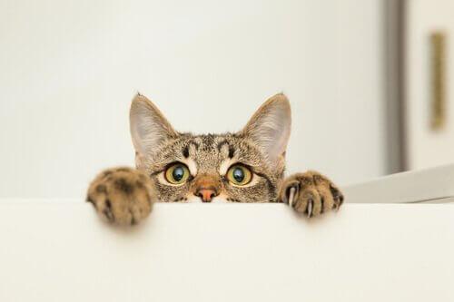 un-gatto-curioso