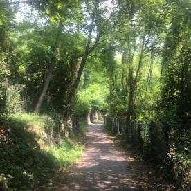 sentiero dei Castegneti