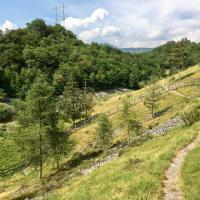 Alla scoperta della Valle del Freddo, la Riserva Naturale dove crescono le stelle alpine