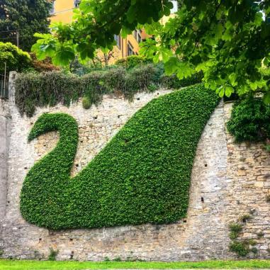 Cigno d'edera di Bergamo Alta
