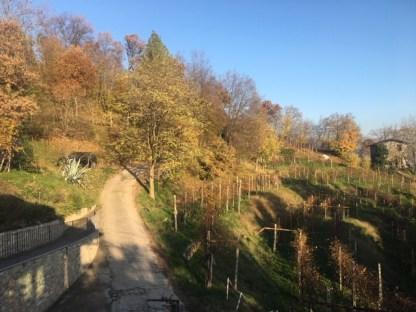 La strada che porta all'Agriturismo Cascina del Frances
