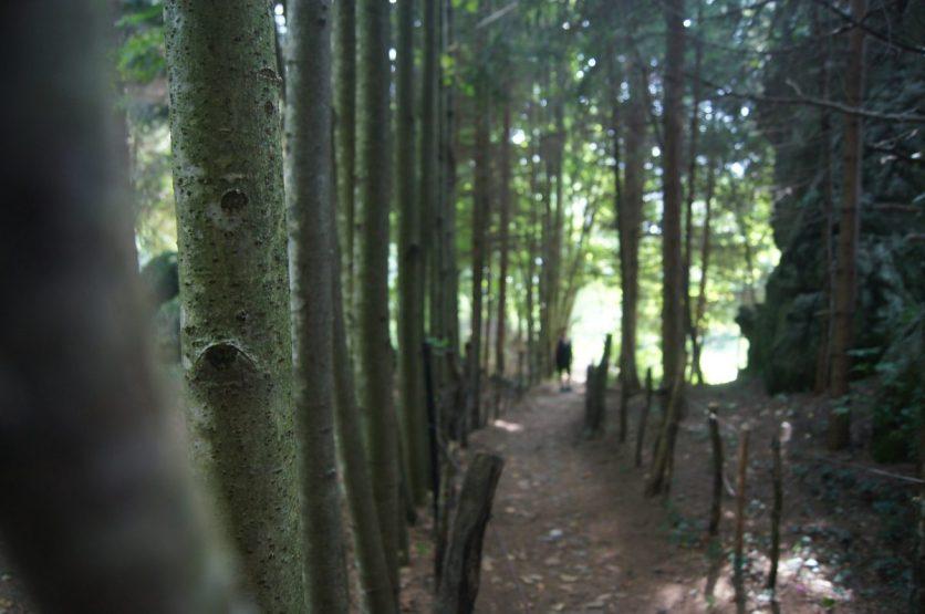 Camminare nei boschi sul Monte Zucco