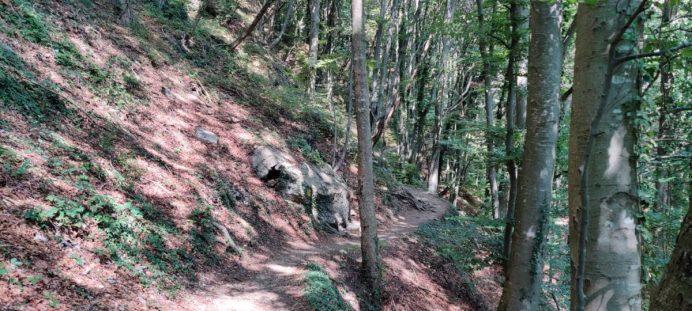 nel bosco sul Monte Zucco