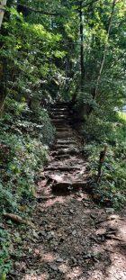 Escursione Monte Zucco il bosco