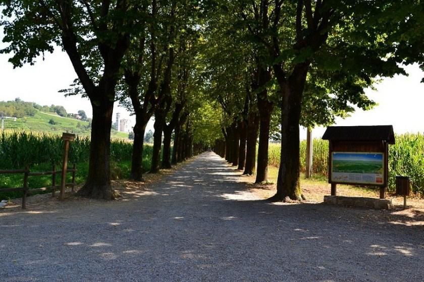 Viale alberato Santuario della Madonna di Prada a Mapello