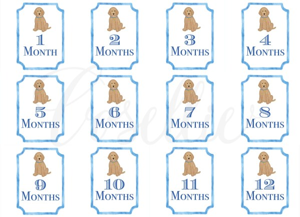 Blue Lab Baby Monthly Milestone Cards, monthly milestone cards, baby boy milestone cards, Dog milestone cards, Labrador, Month by month, Print from home cards, DIY cards