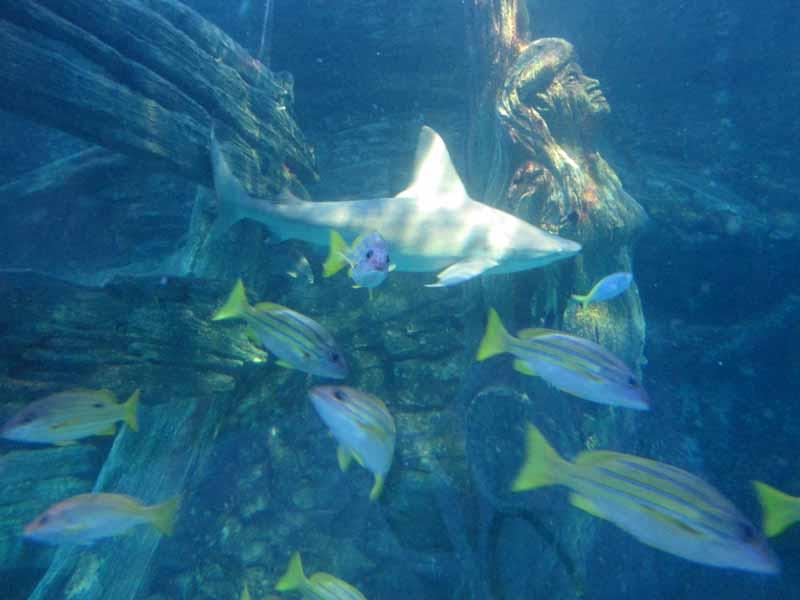 Shark and fish at the Melbourne Aquarium.