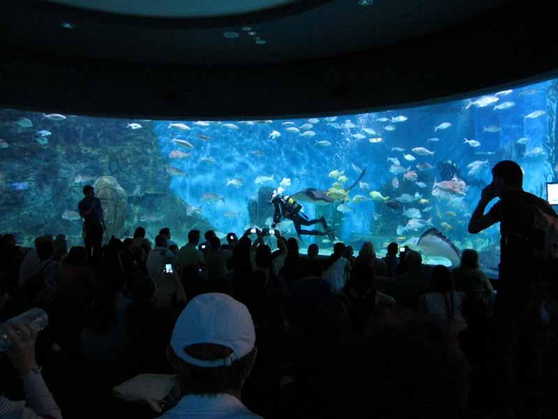 The Oceanarium at the Melbourne Aquarium.