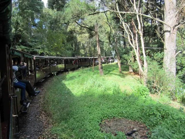 The train passes through forests and fern gullies.