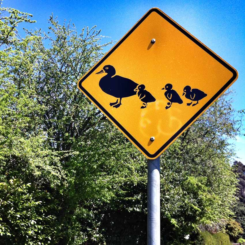 Duck crossing sign.