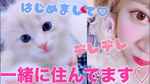 【報告】さぁや、子猫を飼いました!〜初めましてアルです♡〜