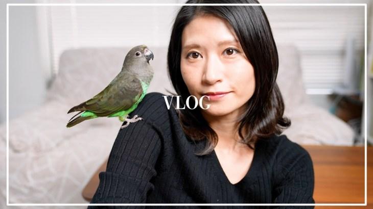 〔 vlog 〕 眉 アートメイク 2週間後 / 眉毛 が ある 生活 〔 アラフォー 主婦 〕