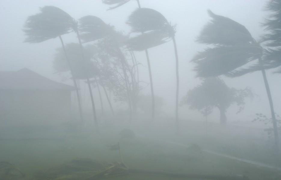 hurricane-wind-trees-935