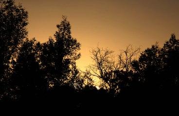 2012-03-24 Sunset Stars