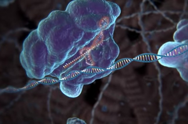 Image: CRISPR-Cas9 at work
