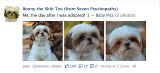 Bonny the Shih Tzu, celebrity dog