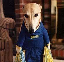 Greyhound cheerleader