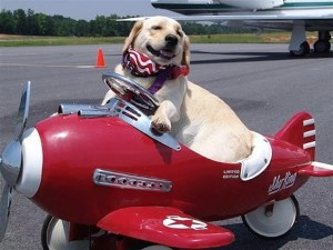 Dog Travel in Airplane