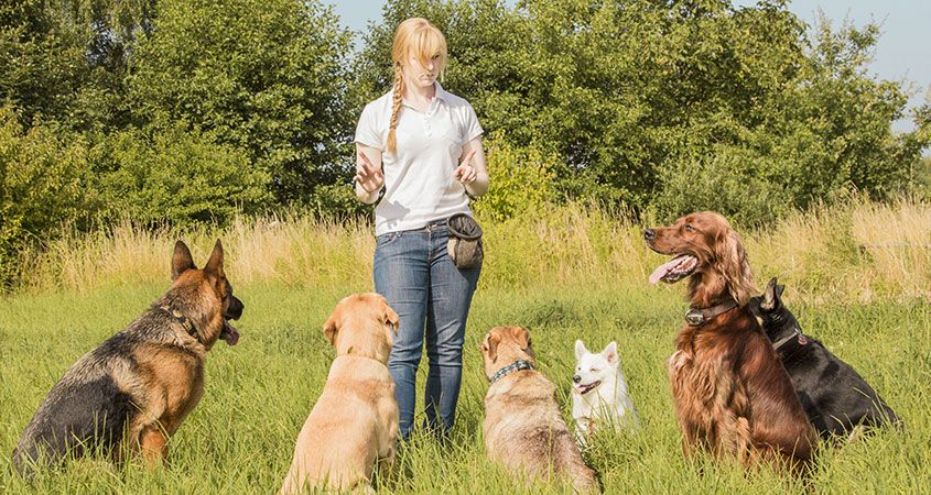 Dog Behavior and Training