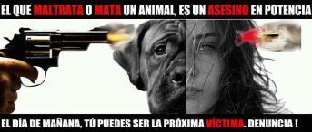 Maltrato animal y violencia doméstica