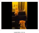 Screen Shot 2014-02-23 at 3.14.24 AM