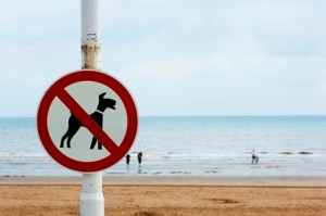 No Dogs Allowed On Beach Sign