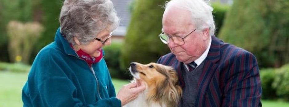 5 Tips para encontrar el perro ideal para la tercera edad