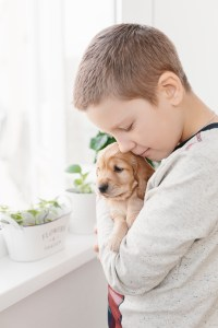 Boy holding english cocker spaniel puppy standing near window at home.