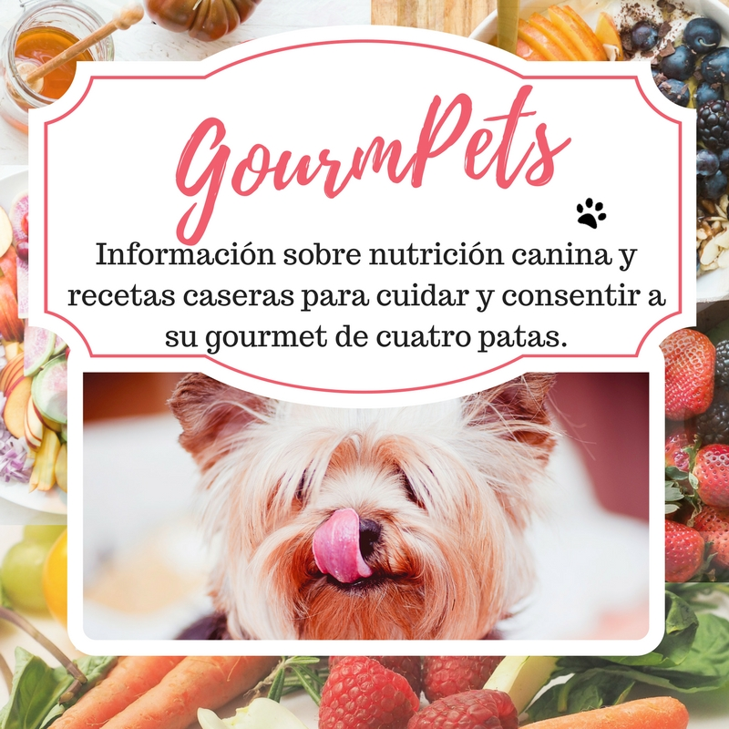 consejos para alimentar a tu perro -Cosmodoggyland