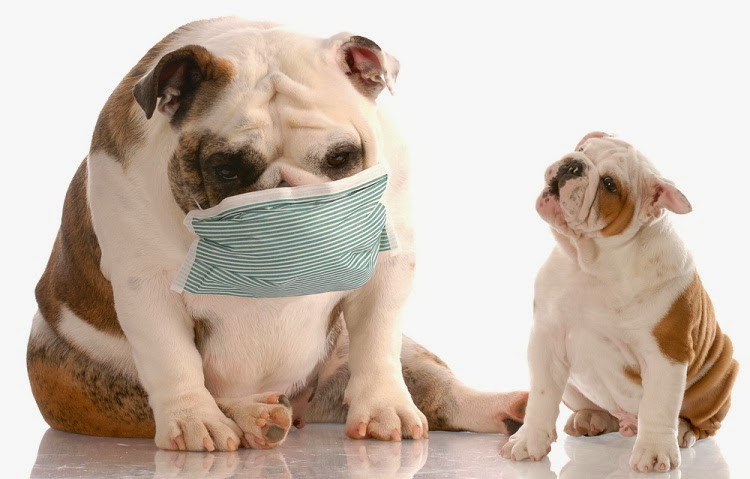 Coughing-dog-with-mask