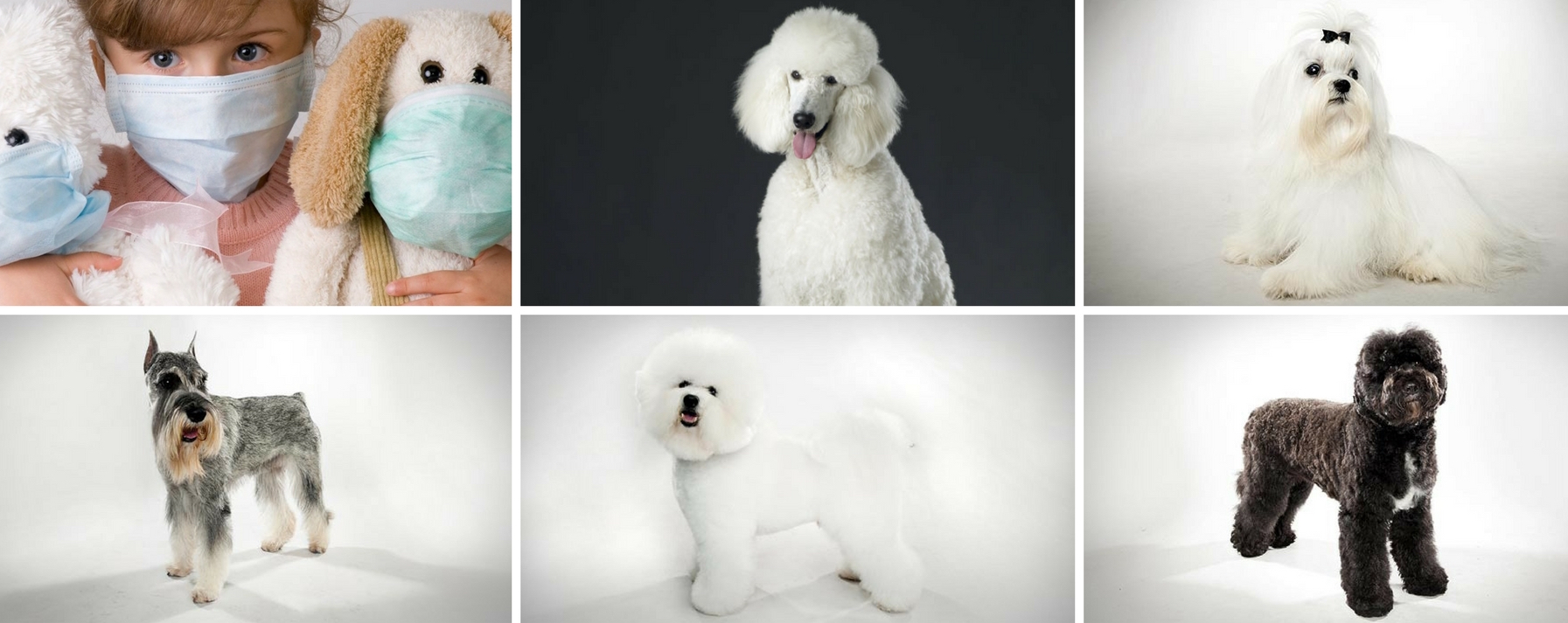 Featured Image Hypoallergenic Dogs copy