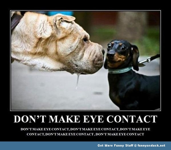 funny-eye-contact-dogs-1
