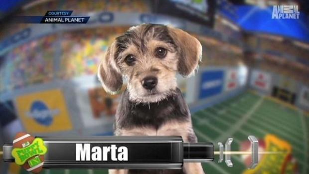 Marta-Puppy-Bowl