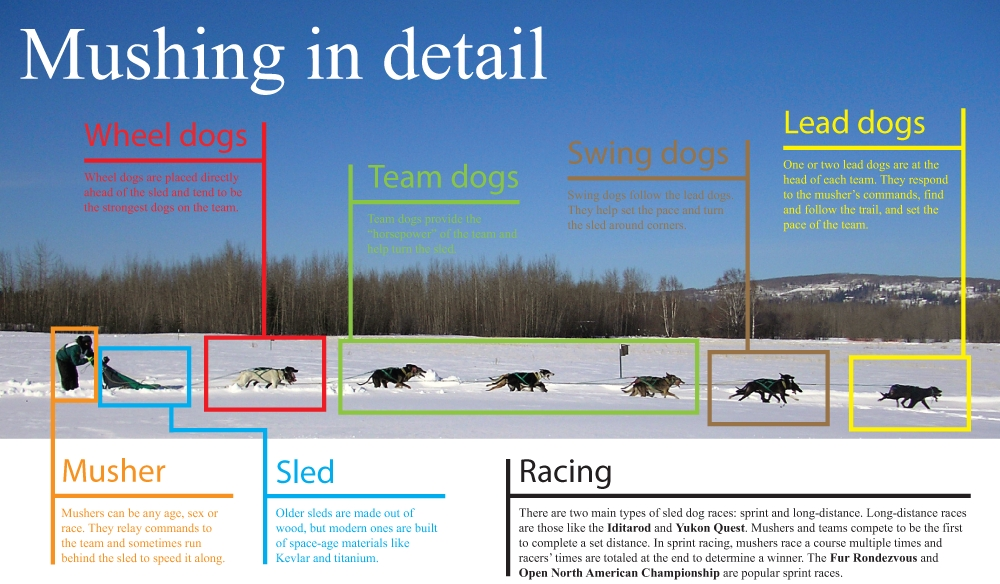 Mushing_graphicx