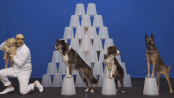 rescued dogs in a music video