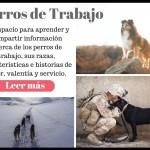 Perros de trabajo Un espacio para aprender y compartir información acerca de los trabajadores caninos, las mejores razas para cada tipo de actividad e historias de amor, valentía y servicio.