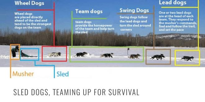 sled-2Bdog-2Bteaming-2BHEADER.png