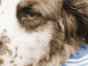 Canine Hero