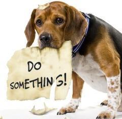 Stop Animal Cruelty Do Something Sign
