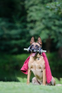 Belgian Malinois Exercise