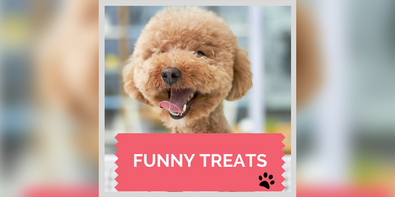Funny Treat- A Taste Of Humor Cosmodoggyland.com