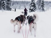 mushing -dog sledding race Cosmodoggyland