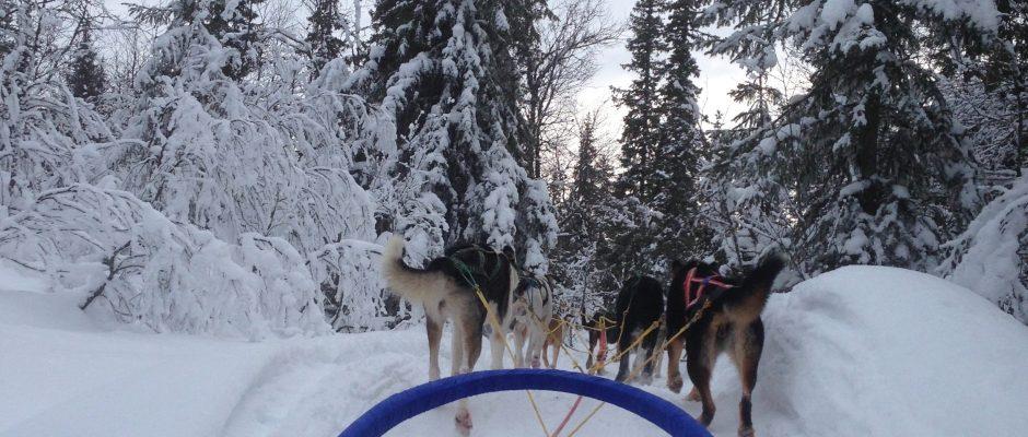Cosmodoggyland - Dog sledding - Musher Interview