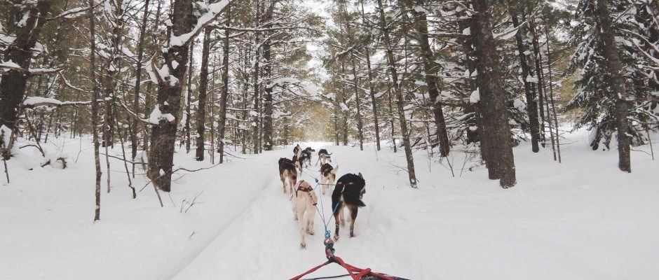 Dog Sled Tours - Cosmodoggyland