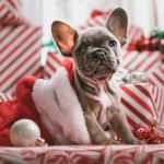 Christmas puppy- cosmodoggyland