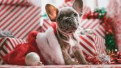Christmas dog- cosmodoggyland