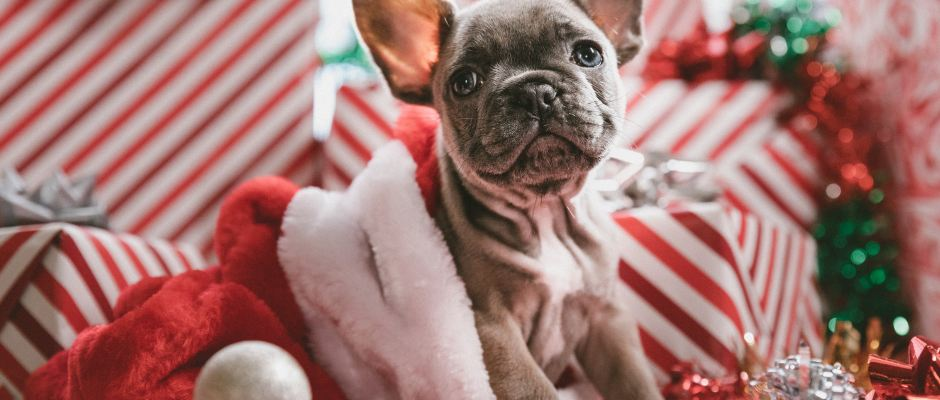Christmas puppy- cosmodoggyland