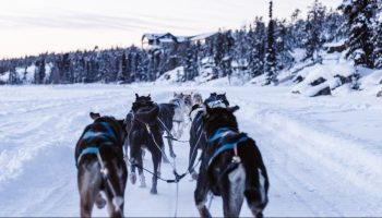 Interview With Carlin Kimble From Snowy Owl Sled Dog Tours