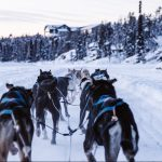 Cosmodoggyland Dog Sled Tours