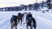 Cosmodoggyland Dog Sled Tours